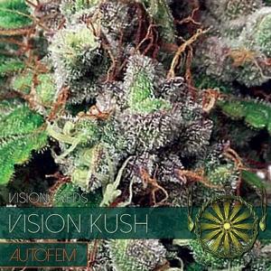 Vision Seeds - Vision Kush AUTO - 5 Auto