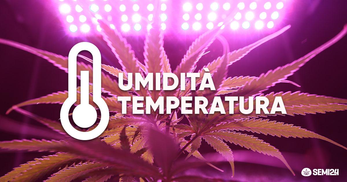 Temperatura e umidità in una grow Box